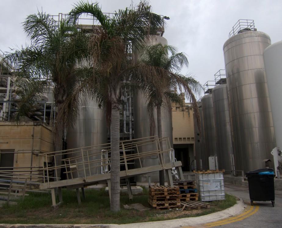 farsons-palm-trees